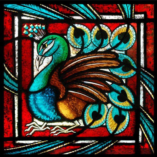 Card 9 - 'The peacock'